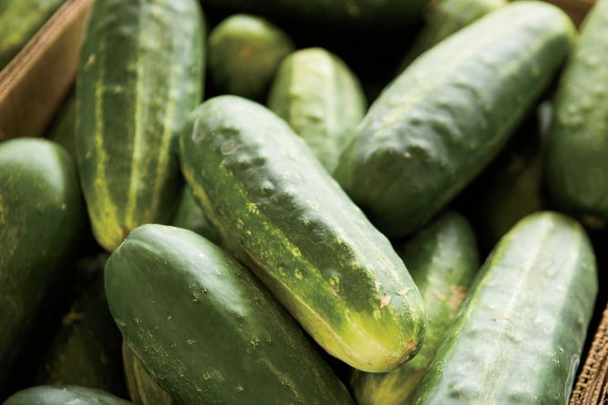 farm facts cucumbers