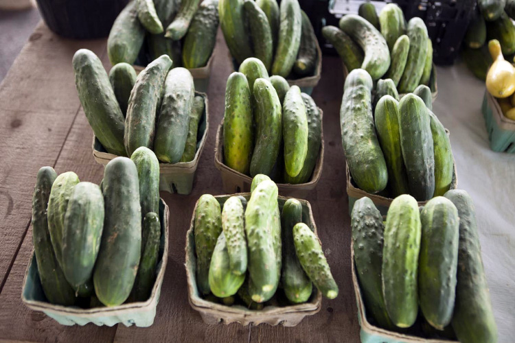 Farm Facts About Cucumbers