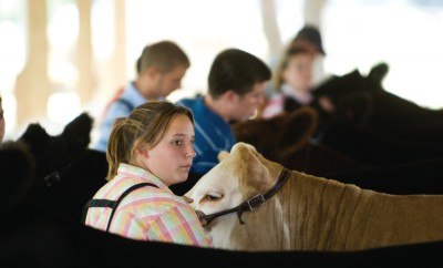 Youth Livestock Showing