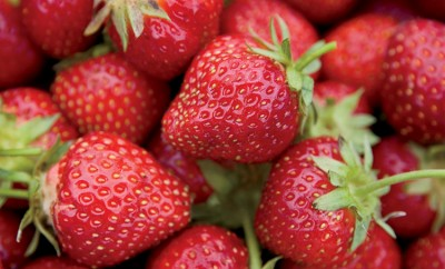 NC Strawberry Project