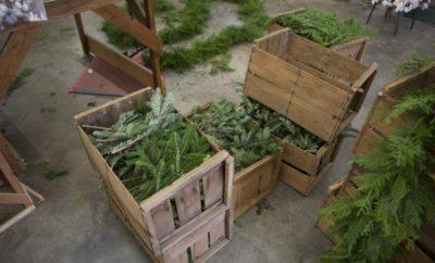 Sanderson Wreaths and Garland