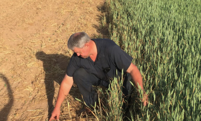 Why Do Farmers Use GMOs