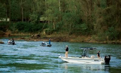 North Carolina Fish Festivals