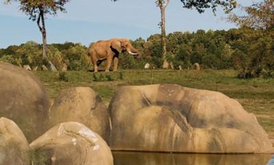 North Carolina Zoo Asheboro