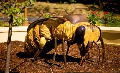 Honey Bee Garden at North Carolina Zoo