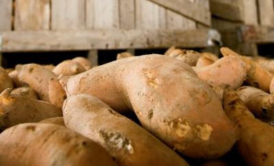 Sweet Potato Facts
