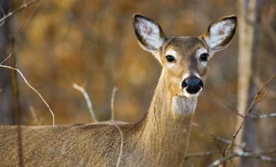 Farmers Manage Deer Program