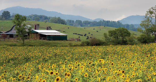 Haywood County Mountain Research Farm