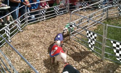 Dixie Classic Fair North Carolina Pig Racing