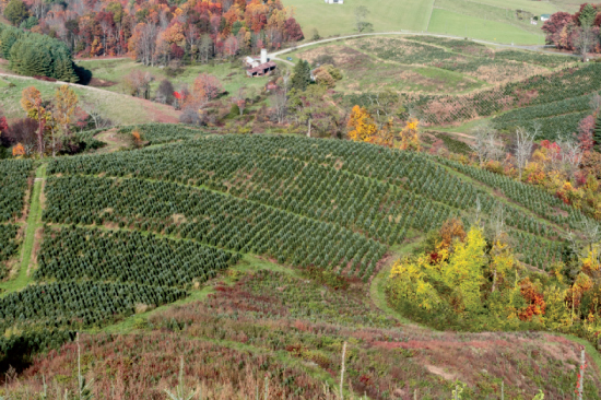 alleghany county forestry